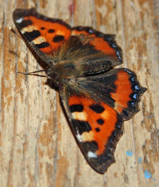 Butterfly in January